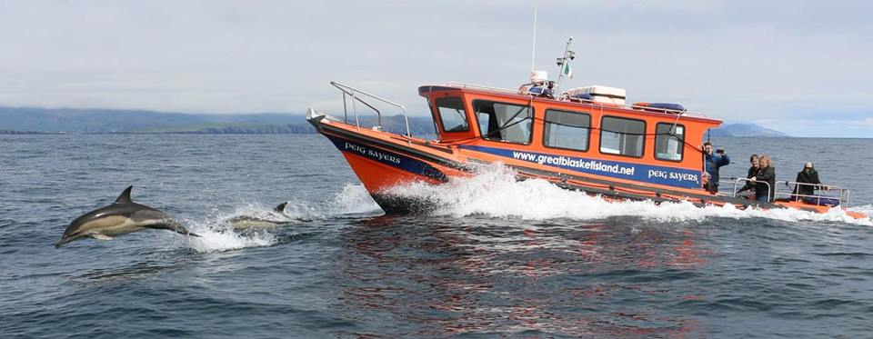Dingle Boat Tours & Great Blasket Island Eco Tours