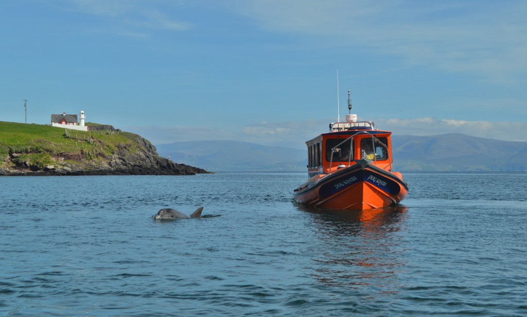 Great Blasket Island ferry &    Fungi the Dingle dolphin