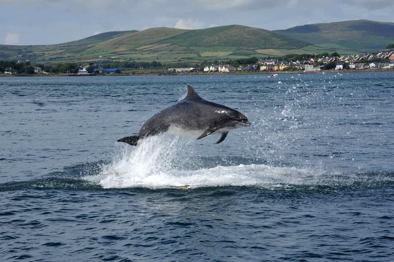 Dingle Ireland Boat Tours
