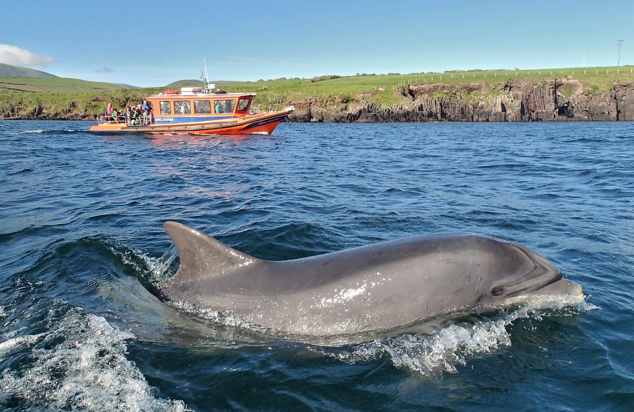 Fungie the Dingle dolphin along side Peig Sayers.