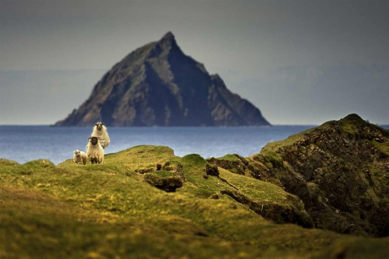 Great Blasket Island with sheep